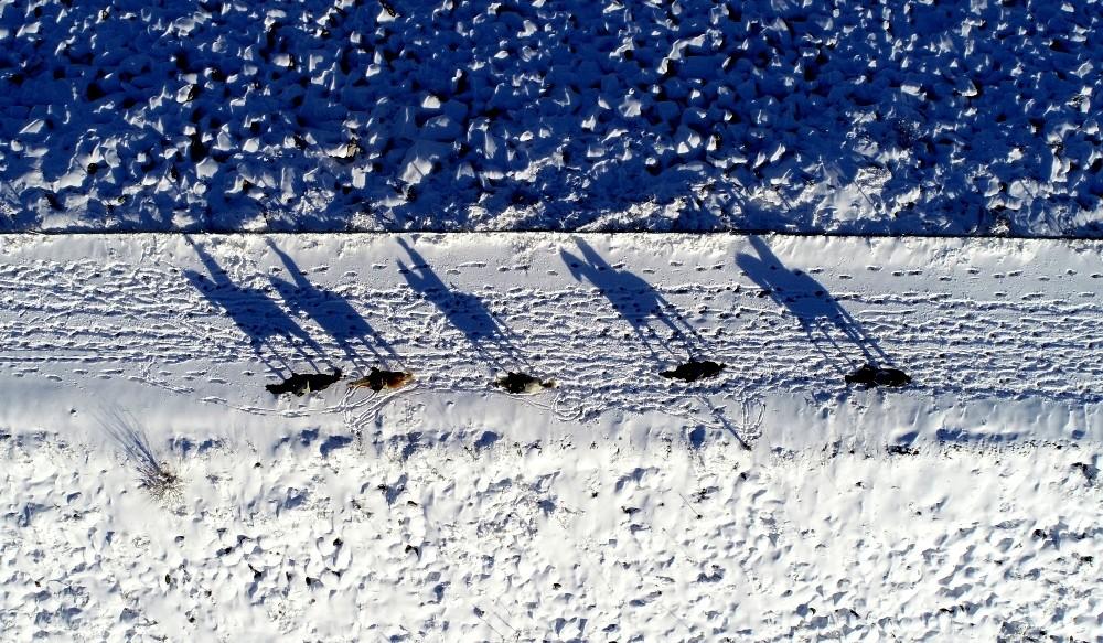 Karlar altında dörtnala özgürlük havadan böyle görüntülendi...