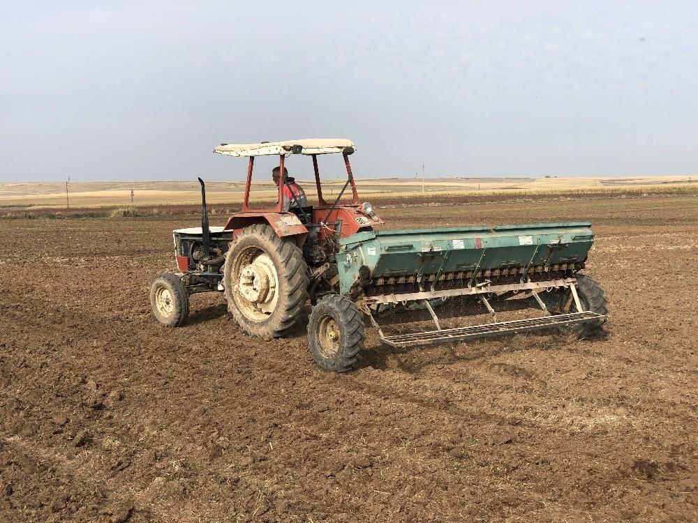 Mardin Ovasında buğday ekimi başladı