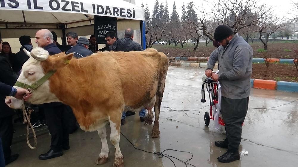 Üreticilere süt sağım makinesi dağıtıldı